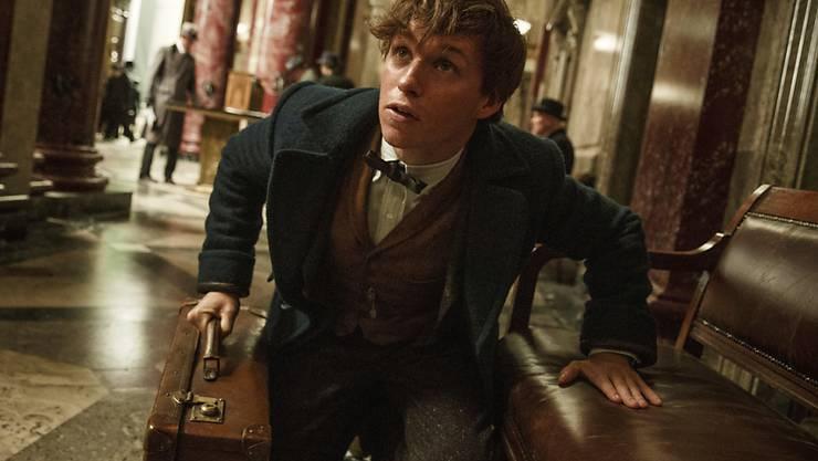 """Schauspieler Eddie Redmayne ist der Star im Film """"Fantastic Beasts and Where to Find Them""""."""