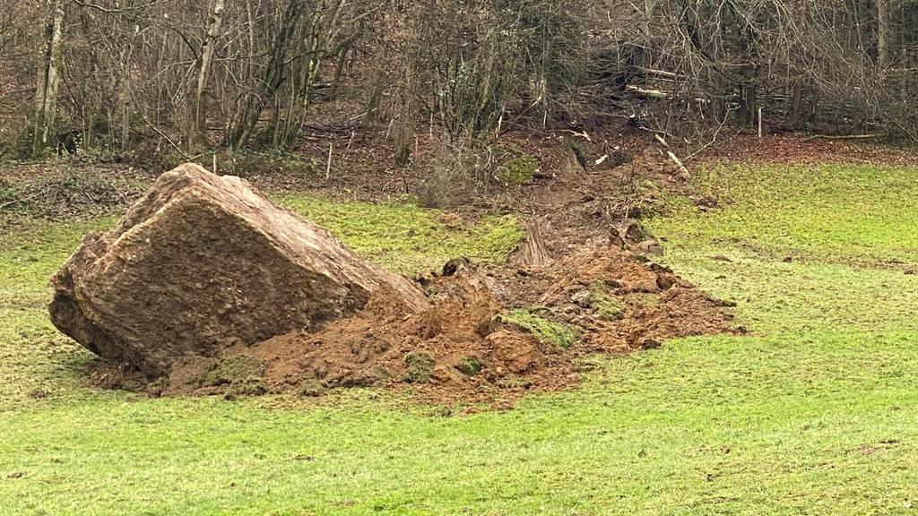 Riesenfelsblock donnert ins Tal, kommt kurz vor Wohnhäusern zum Stehen