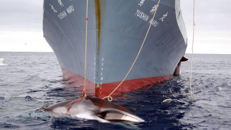 Die Regierung in Tokio ruft die Schiffe zurück.
