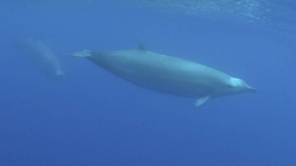 Ganz grosses Forscherglück: True-Wale vor der Kameralinse.