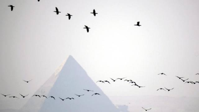Zugvögel fliegen in V-Formation über Pyramiden von Gizeh. (Archiv)
