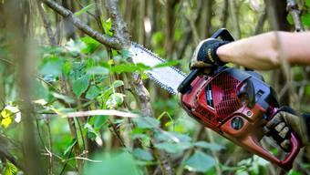 Bald könnte der Betrieb zusätzliche Waldfläche betreuen. (Archiv)