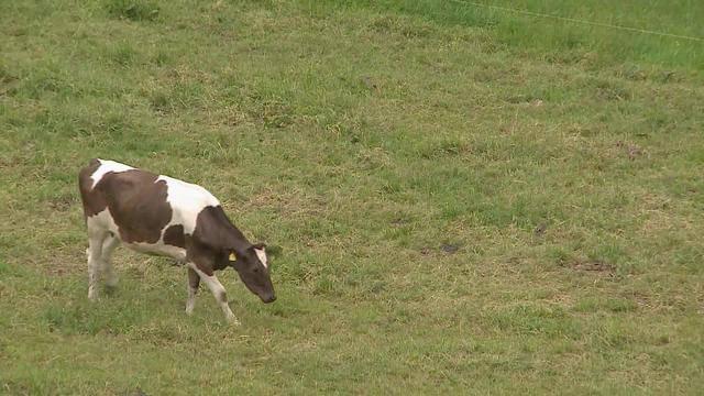 Bauer wegen Tierquälerei vor Gericht