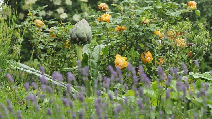 Rose Marie und Rinaldo Begert und Gartenfreund-Kollege Vinzenco Pirroncello laden zum Besuch des grossen offenen Gartens ein.