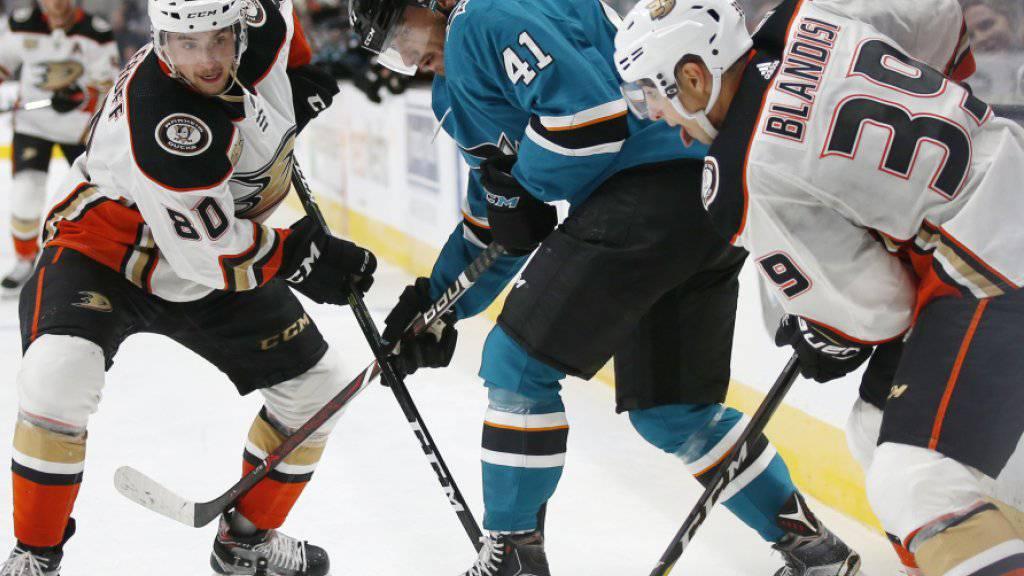 Vincent Praplan (Mitte/Nummer 41) bei einem Vorbereitungsspiel letzte Woche mit dem NHL-Team San Jose Sharks gegen die Anaheim Ducks