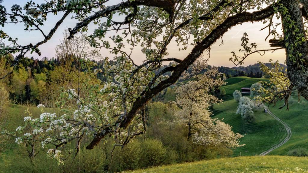 Dieser Ort in Sternenberg heisst gemäss einer Einwohnerin «Under em Pfarrer». Das Bild von Tom Kawara findet sich im Buch «Sternenberg. Ein Ort und seine Geschichte». Erschienen ist es 2019 beim Chronos Verlag in Zürich.