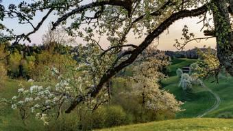 """Dieser Ort in Sternenberg heisst gemäss einer Einwohnerin """"Under em Pfarrer"""". Das Bild von Tom Kawara findet sich im Buch """"Sternenberg. Ein Ort und seine Geschichte"""". Erschienen ist es 2019 beim Chronos Verlag in Zürich."""