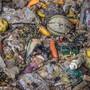 Gute Lebensmittel enden als Biogas