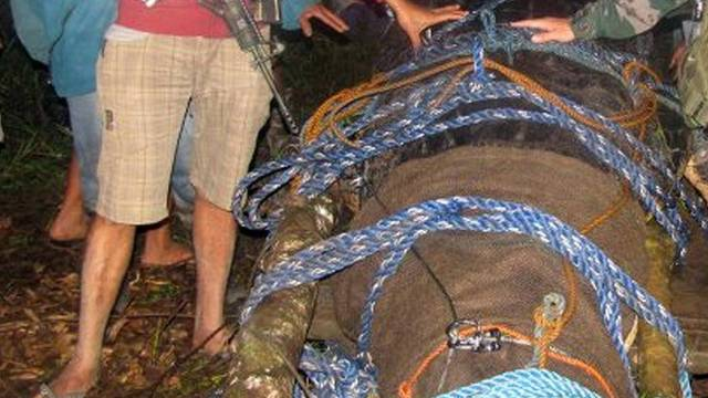 30 Menschen waren am Fang des Killerkrokodils beteiligt