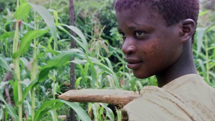 Fällt der Kakaopreis, steigt die Gefahr, dass Kinder auf Plantagen arbeiten müssen.