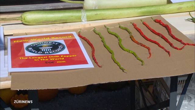 Weltrekord: Jürg Wiesli hat über 50 cm langen Chilli gezüchtet