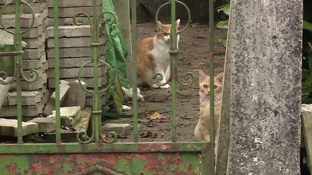 Katzenplage in Rothrist