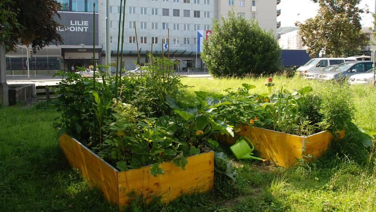 Urban Farming gibts auch in Oberengstringen und Schlieren (im Bild).