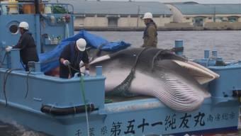 Erster Fang: Japans startet kommerzielle Jagd auf Wale.
