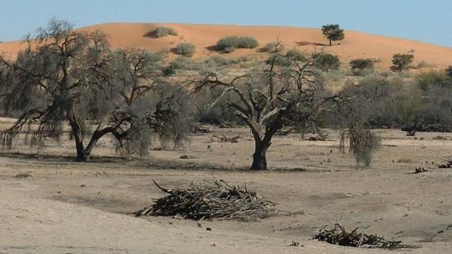 Die Wüste in Afrika breitet sich aus (Symbolbild)