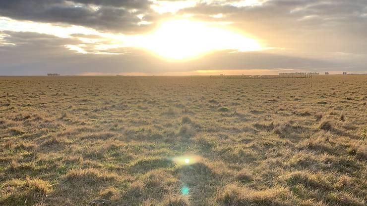 Auf Versuchsflächen wie dieser im nördlichen Argentinien untersuchten Forschende der WSL mit internationalen Kollegen den Stickstoffgehalt im Grasland weltweit.
