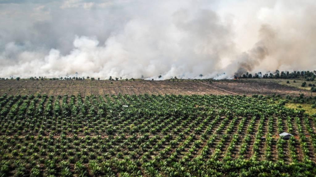 Superreiche Anleger befeuern die Rodung von Wäldern