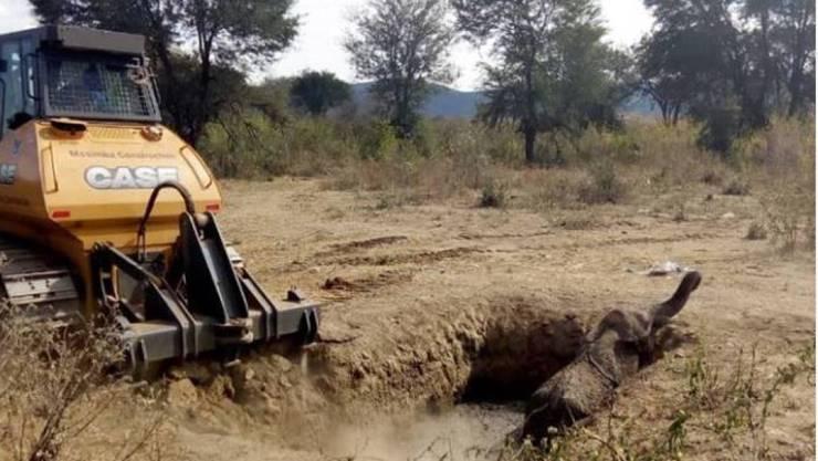Der junge Elefant hatte bereits die ganze Nacht in der Schlammgrube verbracht, als Tierschützer mit einer Planierraupe die steilen Wände der Grube abflachten.