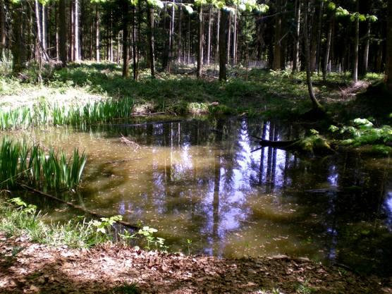 stiller Waldweiher