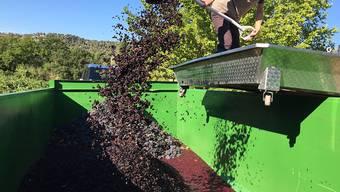In Frankreich wird heuer mit einer ertragreichen Weinernte gerechnet. (Archivbild)