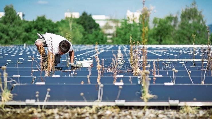 Grosse Hoffnungen ruhen auf Solaranlagen. Das Potenzial auf Dächern (hier in Spreitenbach) ist gross.