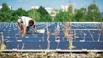 Kommt die Pflicht für Solaranlagen auf Neubauten?