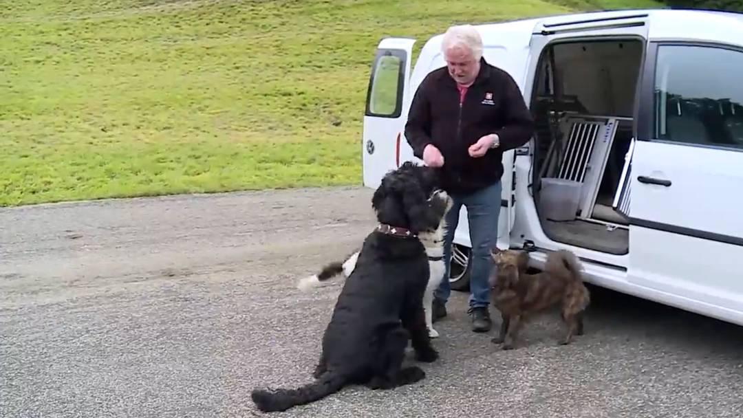 Er beurteilt Problemhunde fürs Veterinäramt: «Mich hat noch keiner getäuscht»