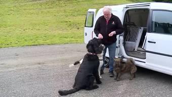 """Er sagt von sich, er könne Hunde lesen: In der Sendung """"tierisch"""" sprach Hundetrainer Urs Baschung über sein Vorgehen."""