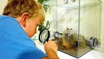 Im Museum dürfen Kinder ausprobieren.