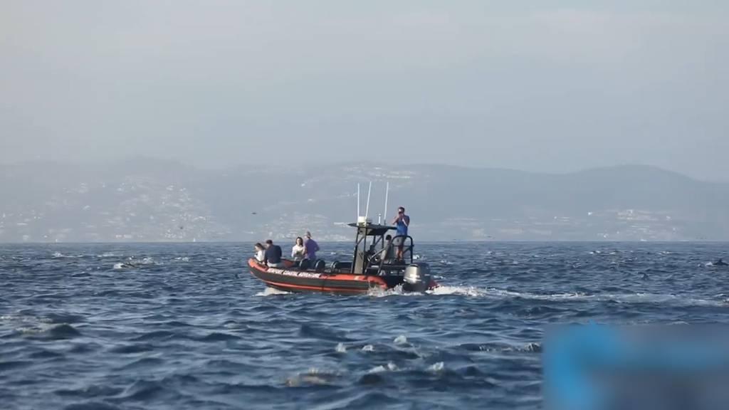 Delfinschwarm überrascht Walbeobachter