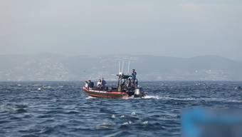 Tierische Überraschung vor der Küste der kalifornischen Stadt Laguna Beach: Die Teilnehmer einer Walbeobachtung fanden sich am Wochenende plötzlich inmitten hunderter Delfine wieder. Die Tiere hatten vor der Küste nach Fischen gejagt.