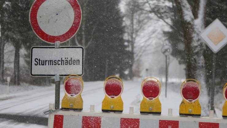 """Umgestürzte Bäume sorgen nach dem Sturmtief """"Sabine"""" im deutschen Bundesland Sachsen-Anhalt für Verkehrseinschränkungen auf den Strassen."""