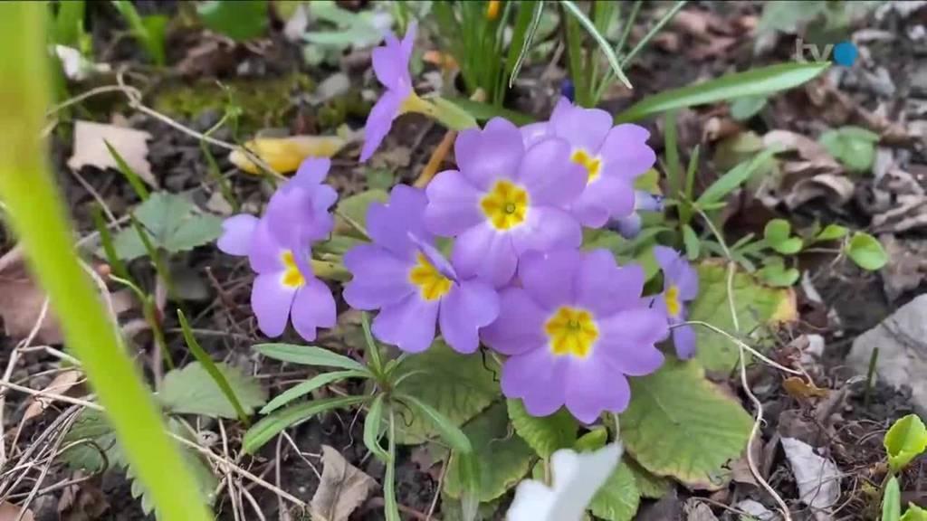 Frühling: Impressionen zum Frühlingsbeginn
