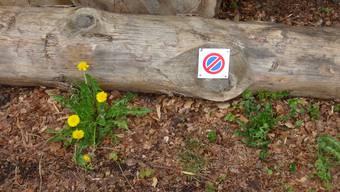 Ein Kind kennt das Parkverbots-Schild, ein Autofahrer scheinbar nicht (Symbolbild)