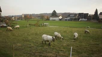 Noch ist das Gewerbe- und Wohnprojekt im Mühlegarten in weiter Ferne.
