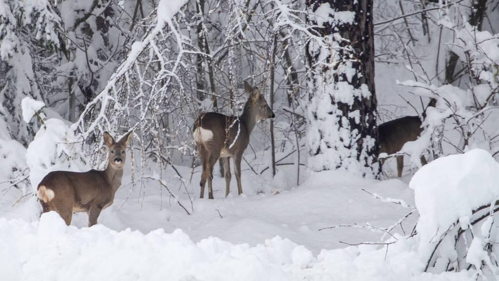 Schnee und Regen sorgen erneut für Chaos in Österreich