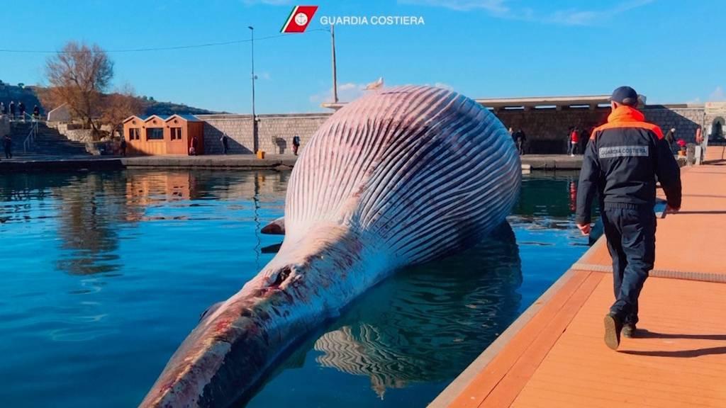 Qualvoll verendet: 70 Tonnen schwerer Wal strandet im Golf von Neapel