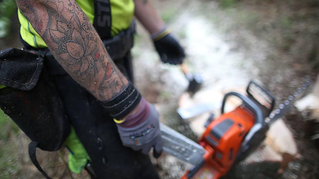 Herabfallender Baum trifft 39-jährigen Mann
