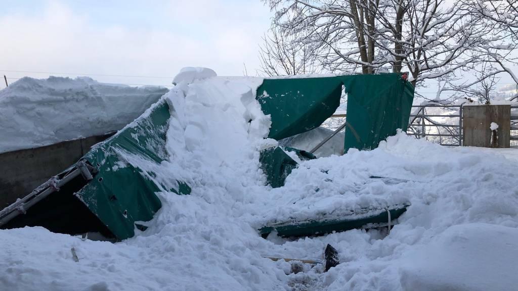 Der Zeltunterstand konnte der Schneelast nicht Stand halten.