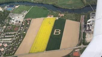 Ein B zeigt sich in einem Feld am Rande von Zuchwil
