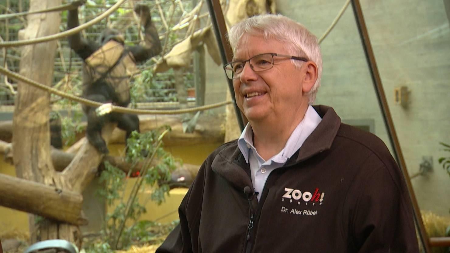Abschiedstour durch den Zoo Zürich - TeleZüri