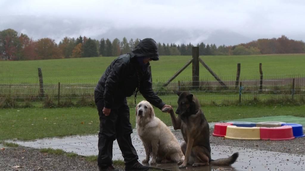 Fehlende Hundeerziehung nach dem Lockdown