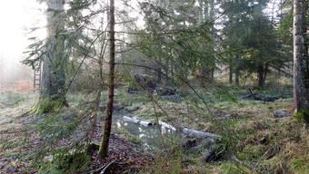 Das «Bärenmoos» ist ein einzigartig strukturiertes Waldfeuchtgebiet.