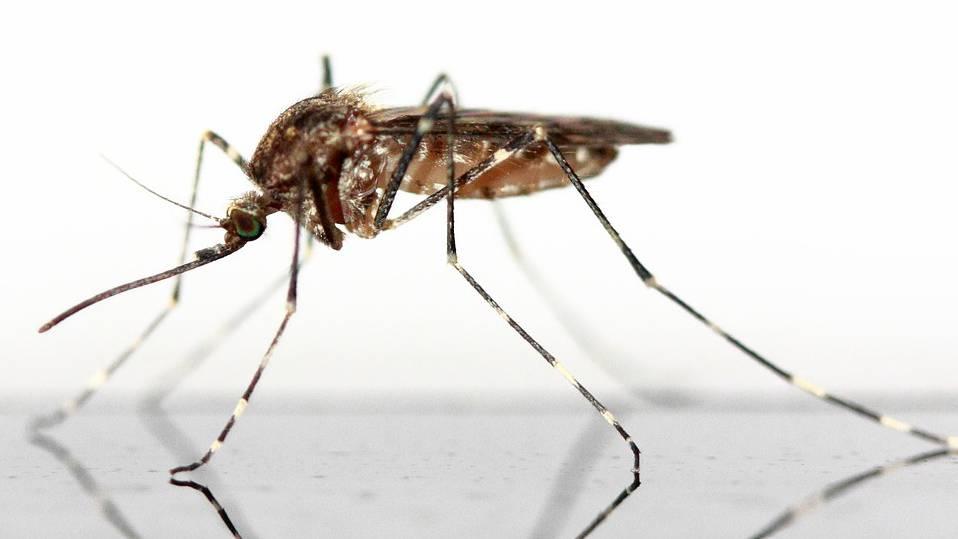 Mücken_