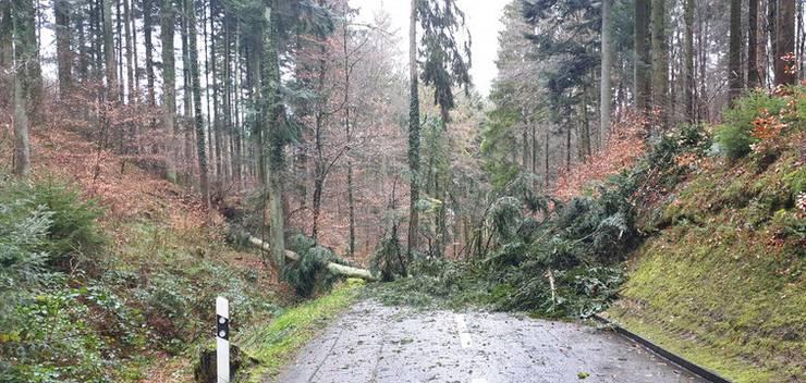 Sie wurde vom örtlichen Forstamt beseitigt.