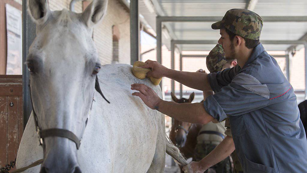 Angehörgie der Armee pflegen im bernischen Schönbühl die Pferde, die aus der geschlossenen Pferdezucht eines mutmasslichen Tierquälers im Kanton Thurgau stammen.