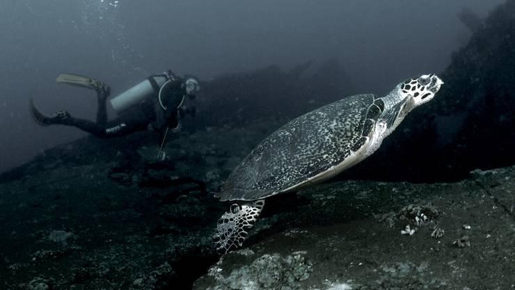 Stundenlang könne sie sich die Unterwasserwelt ansehen, schwärmt Strähl.