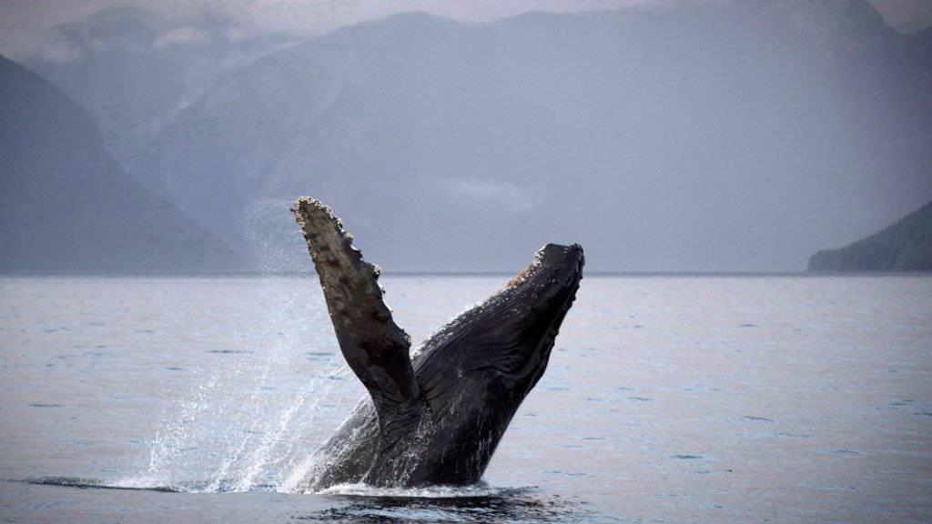Wal-Kinder flüstern mit ihren Müttern