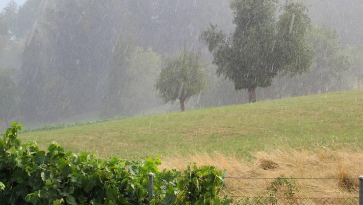 Gestern regnete es seit langem wieder.
