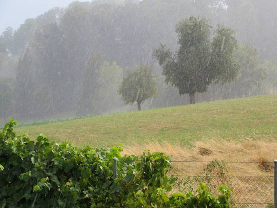 Heftig der Regen heute am 8.8.2018